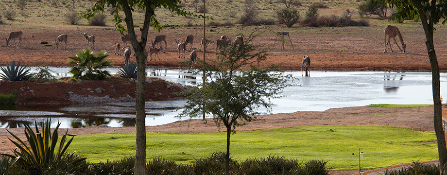 lapa_lange_game_lodge_mariental_accommodation4
