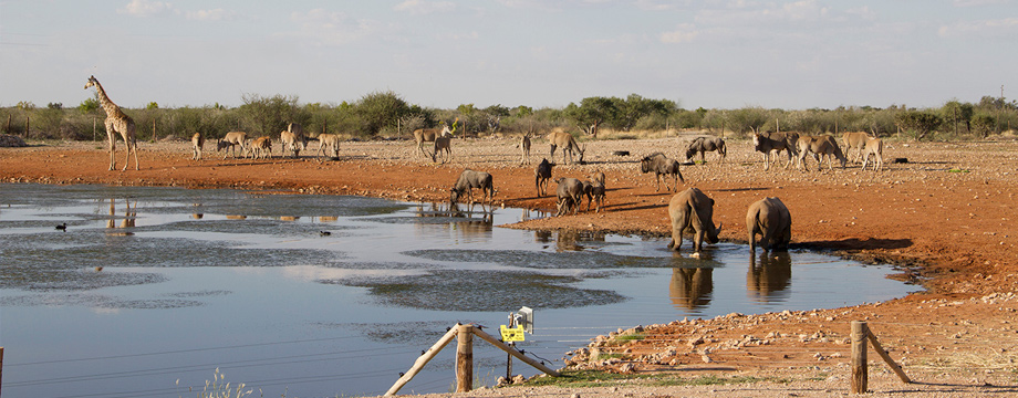 lapa_lange_game_lodge_mariental_wildlife
